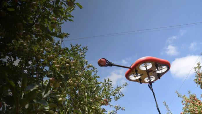 Flying autonomous robot can spot and pick ripe fruit