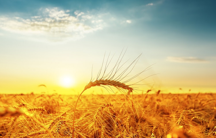 African countries' agricultural reforms will ensure free trade deal benefits SA too