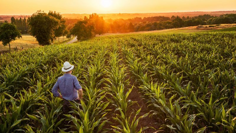Good financial decisions will ensure SA agriculture survival during bad times
