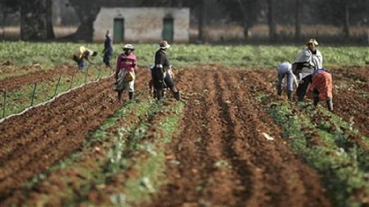 South Africa makes progress on geographical indications to support rural, agricultural development