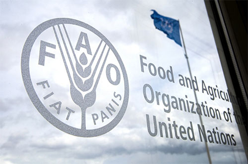 FAO, AUC launch guide to help countries enter Africa's new single market