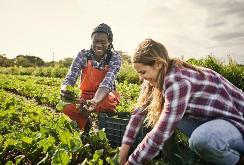 AGCO Africa skills programme to tackle youth unemployment