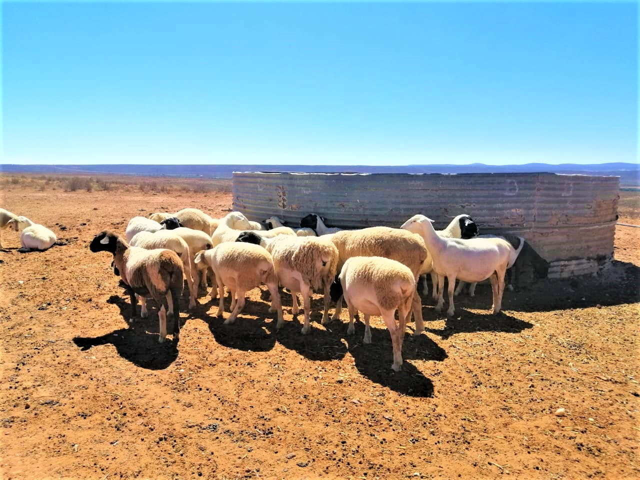 FARMERS IN DROUGHT STRICKEN AREA RECEIVE FODDER SUPPORT