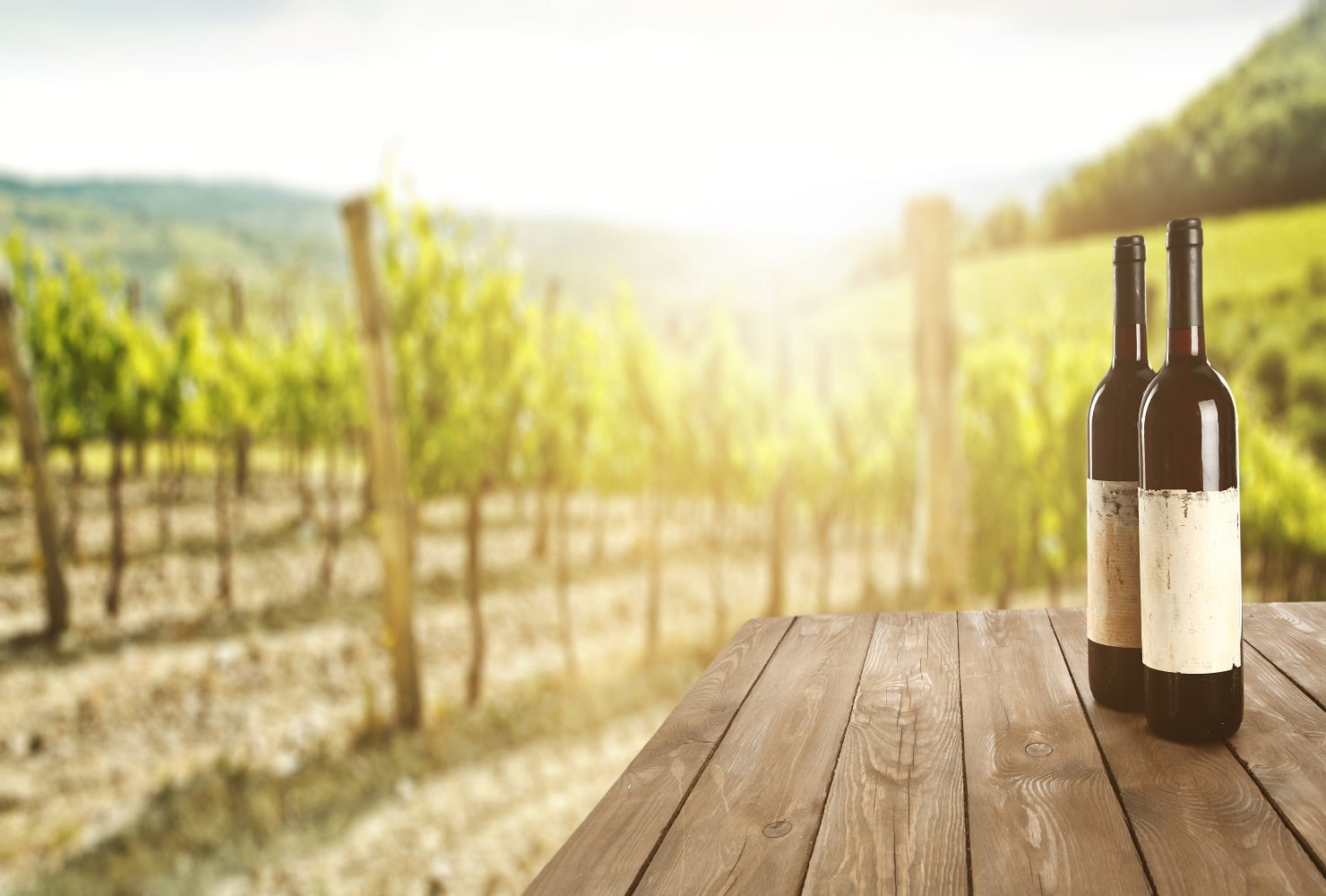 Slow and steady wins the race for SA wine industry's 2020/21 grape season