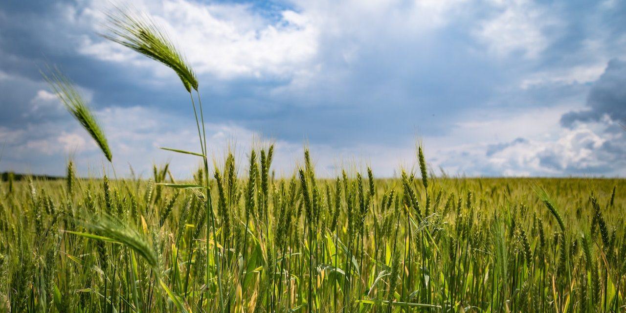 Africa Agri-foods Development Programme