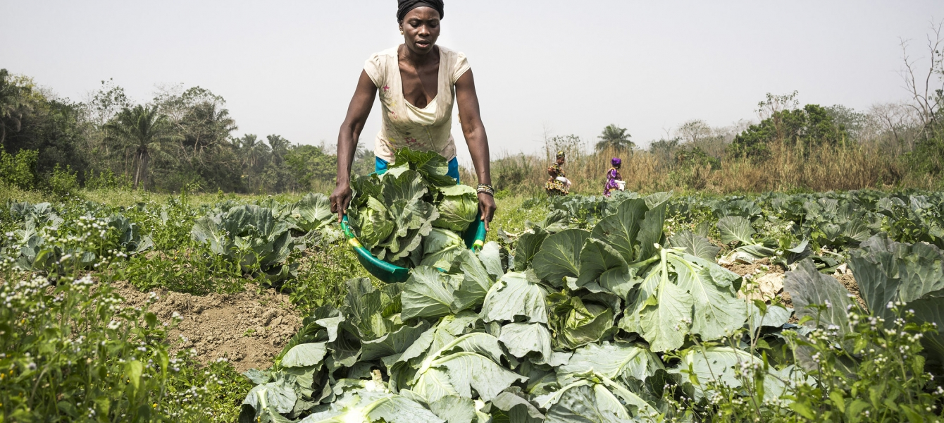 Feeding Africa from Africa: Smallholder farmers to leverage on AfCFTA
