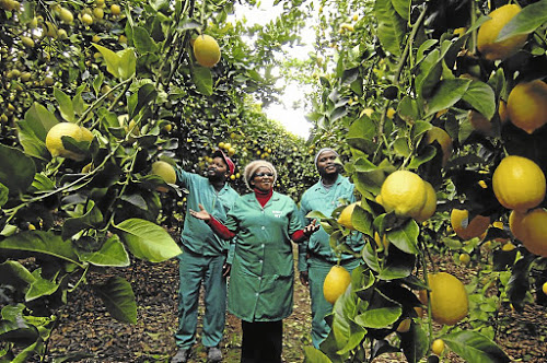 Lemon export protocol to boost investment, create jobs