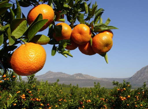 South African citrus en route to Philippines after 12 years of negotiations