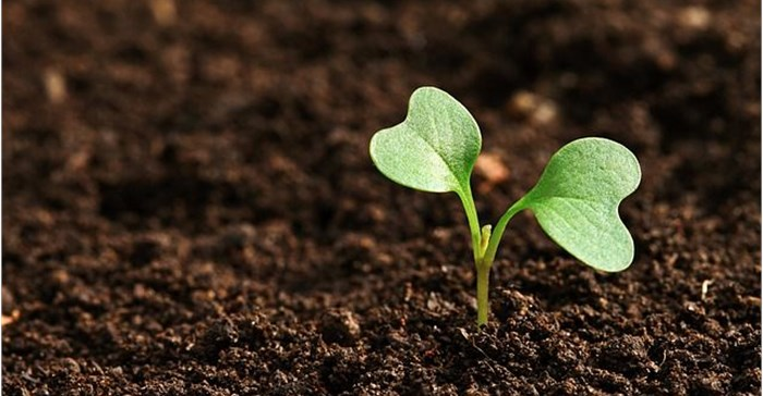 Youth-led, African agribusinesses announced as Pitch AgriHack 2021 winners